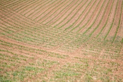 0520 - Sowed Field