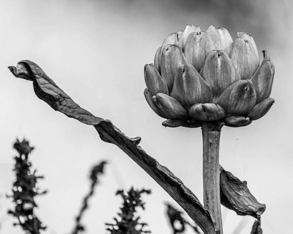 Nature photogrpahy 2